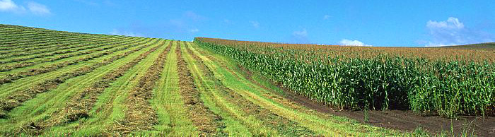 country_field_landscape_photo_EA52058
